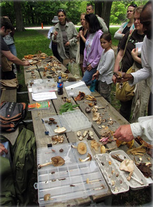People look at 2 tables covered with mushrooms.