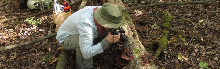 Woman photographing mushrooms on log.