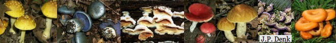 Collage of six different mushrooms.